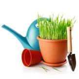 Flowers, Plants & Supplies